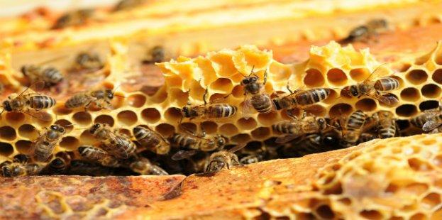 Parrainez une ruche pour sauver les abeilles !